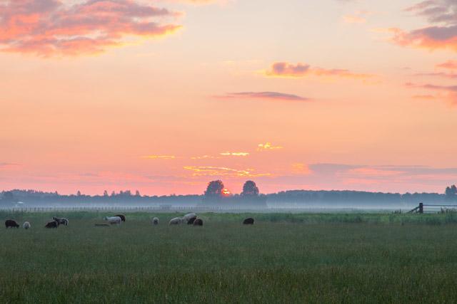 landschap29-6