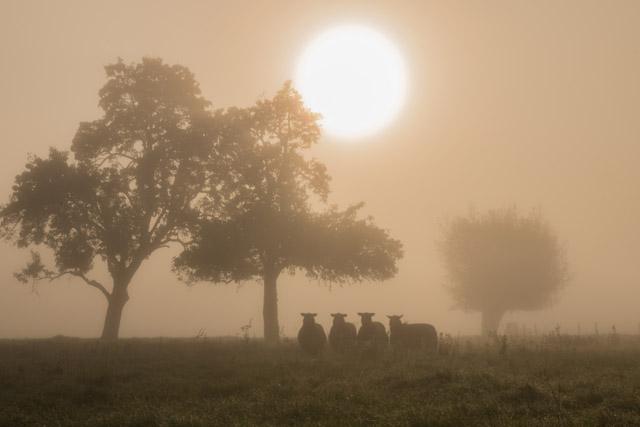 schapenindemistlandschap